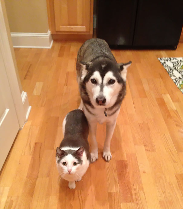Animals Who Could Be Confused For Siblings But Are NOT! (8)