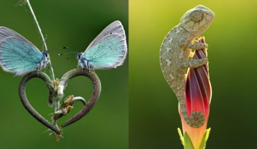 20 Beautiful Images That Prove Nature Is The Best Gift
