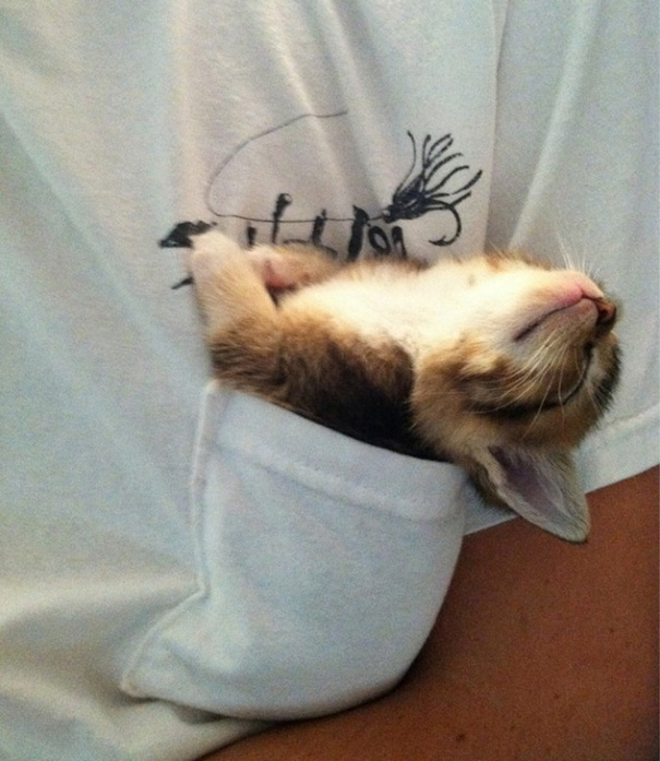 Kittens Who Are Asleep And Hilarious At The Same Time! (11)
