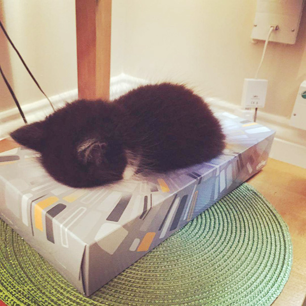 Kittens Who Are Asleep And Hilarious At The Same Time! (14)