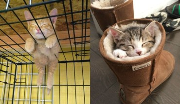 15 Kittens Who Are Asleep And Hilarious At The Same Time!