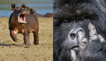 17 Times Animals Proved They Are Funnier Than Humans