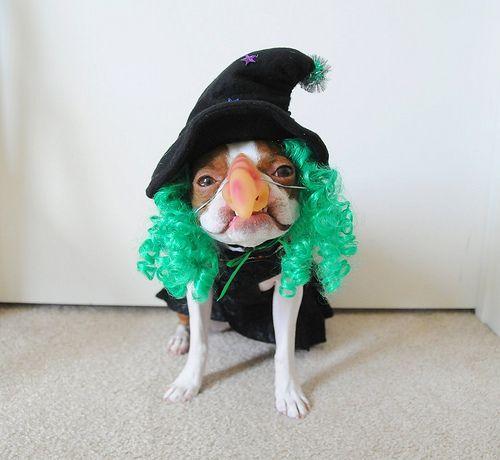 10-pet-costume-ideas-for-halloween-7