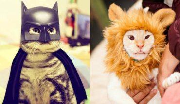 10 Pet Costume Ideas For Halloween