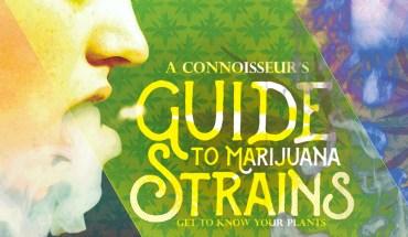 Get To Know Marijuana Plants Better - Infographic