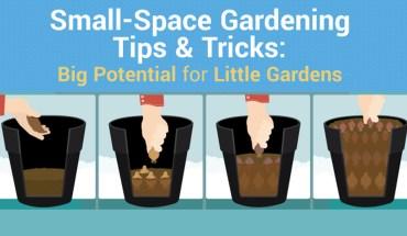 Gardening Hacks - Infographic