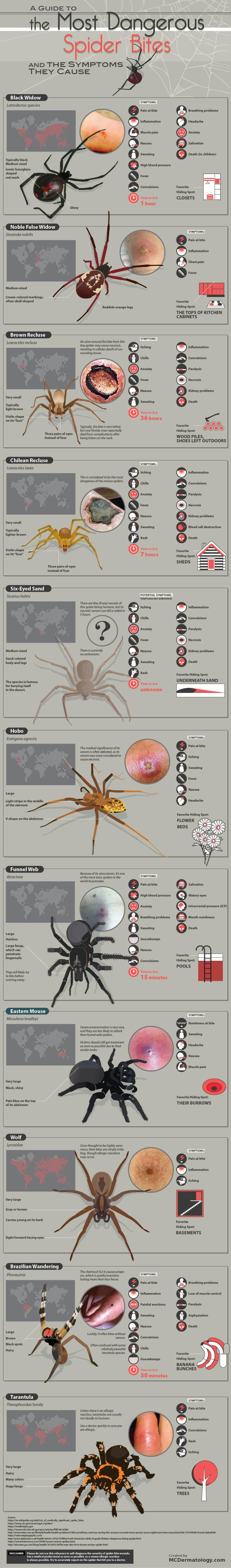 How to Recognize Dangerous Spider Bites - Infographic