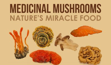 How Mushrooms Can Heal You Naturally - Infographic