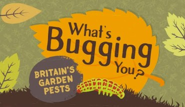How to De-Bug Your Garden - Infographic