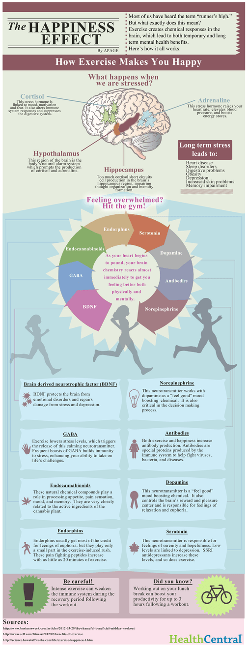 Why You Feel Good After Working Out - Infographic