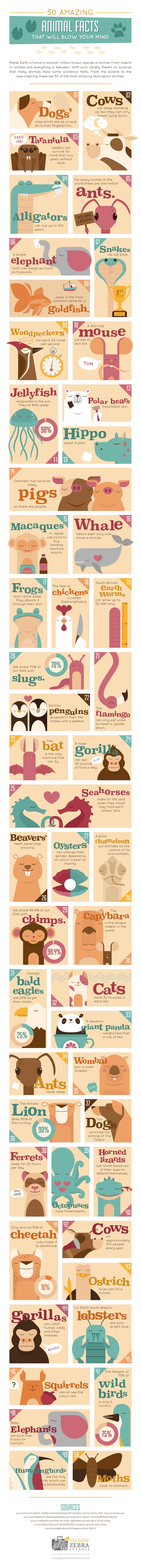 50 Mind-Blowing Facts from the Animal World - Infographic