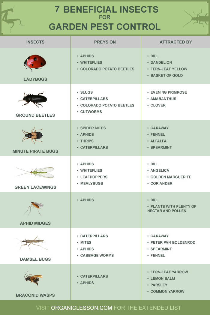 Lasting Garden Pest Control? Let the Insects Stay! - Infographic