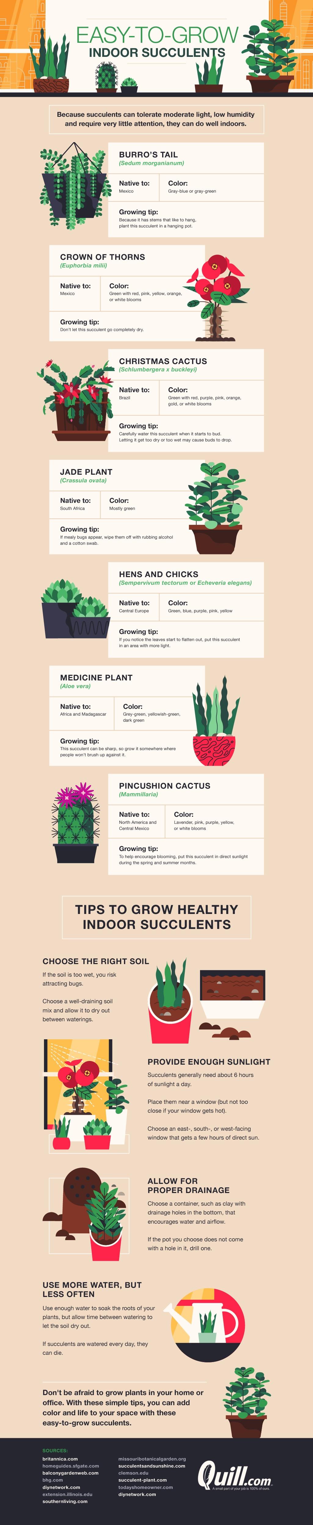 Indoor Succulents: How to Nurture Them - Infographic