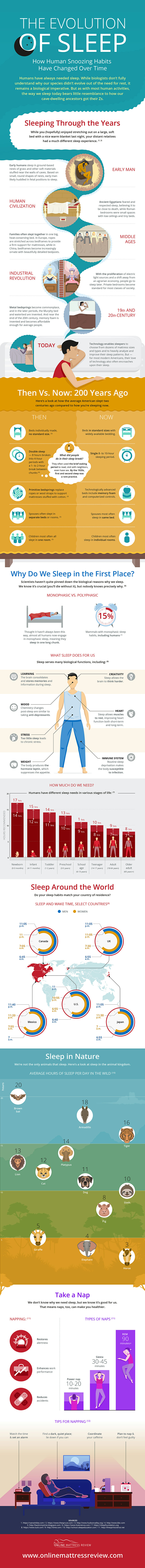 Why and How Much Sleep Do We Need: The Evolution of Sleep - Infographic