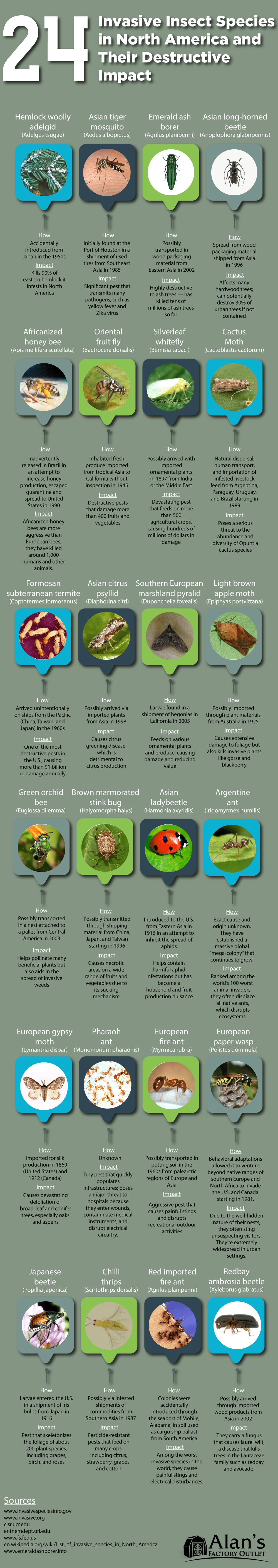 Insect Species in North America that are Invasive - Infographic