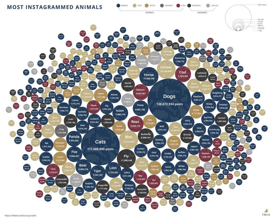 And the Most Popular Instagram Animal Vote Goes To… - Infographic