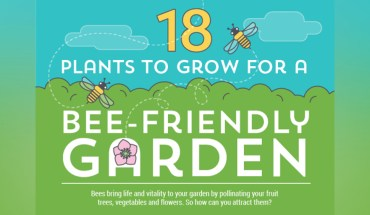 The World Needs Bees! How to Create an Inviting Bee-Friendly Garden - Infographic