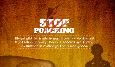 Poaching is Evil, Stop NOW!! - Infographic