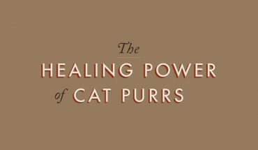 The Magical Connect between Cat Purrs and Negative Energy - Infographic
