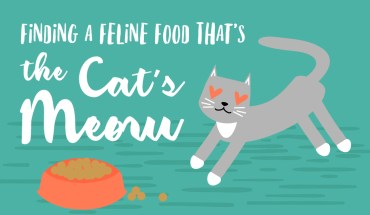 How to Plan a High Nutrition Cat Diet - Infographic