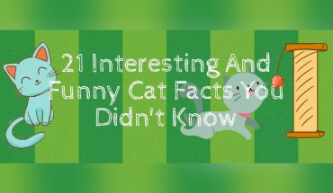 Cat-Odditites: 21 Unusual Facts About Cats You Didn't Know - Infographic