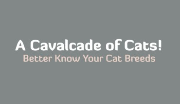 The Cat Brigade: Know Your Cats! - Infographic