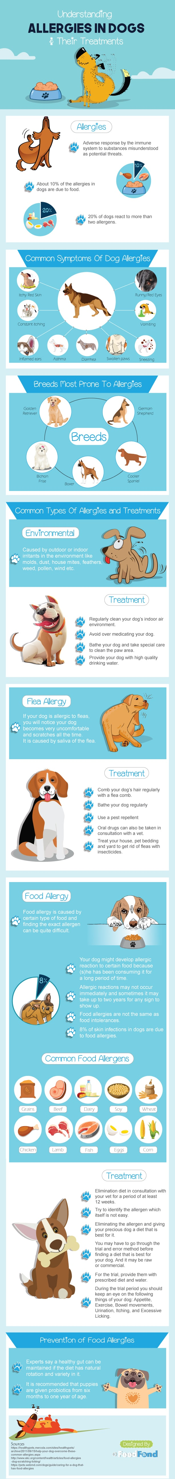 How to Read Your Dogs Allergies and Get the Right Treatment - Infographic