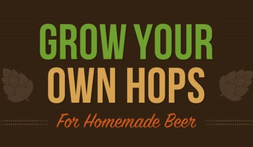 Grow Your Own Hops for Homebrewed Beer: The Comprehensive Guide - Infographic