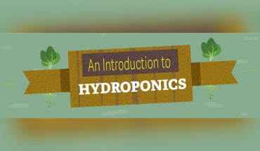The Incredible Benefits of Hydroponic Gardening - Infographic