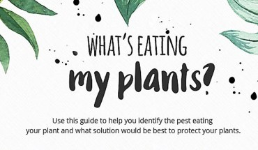 Gardeners' Guide to Plant-Eating Pests and the Solution - Infographic