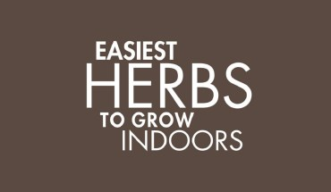 How to Create Your Own Indoor Herb Garden - Infographic