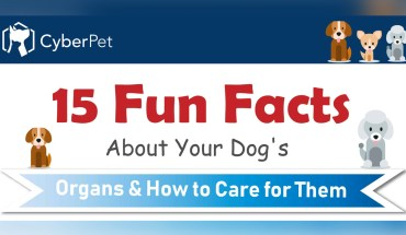 Interesting Facts About Your Dog's Organs - Infographic