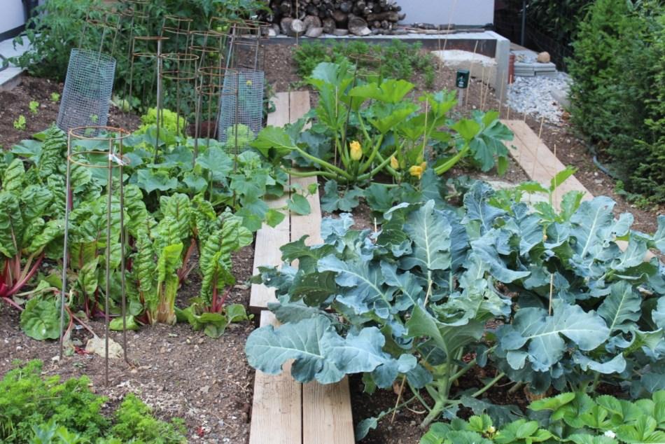 (c) Grashüpfer, Gemüsebeet, Gemüse ernten