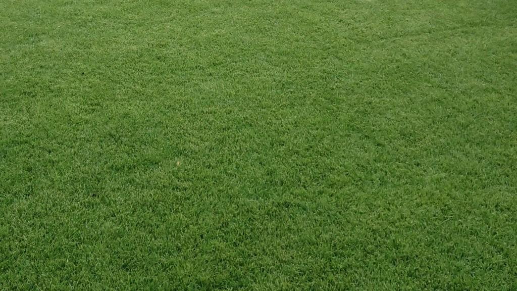 Richtige Rasenpflege im Sommer