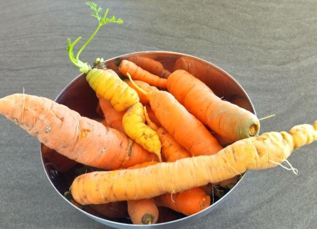 (c) Grashüpfer_Gemüsebeet-die letzte Ernte-Kartotten