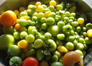 (c) Grashüpfer_Gemüsebeet-die letzte Ernte-Tomaten-2