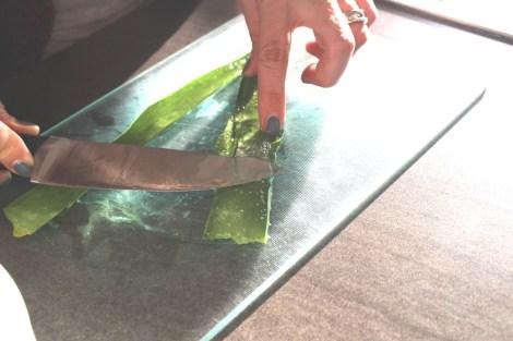 (c) Grashüpfer, Aloe Vera Gel herausschaben