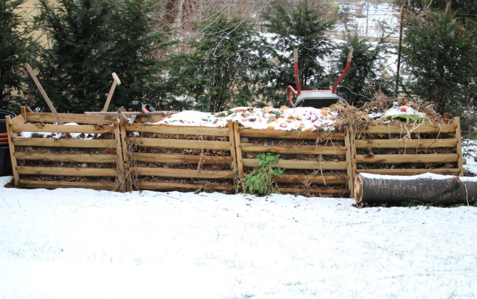 (c) grashüpfer, komposthaufen im winter