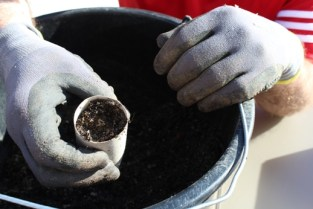 (c) Grashüpfer, Erde einfüllen für Jungpflanzen
