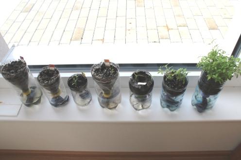 (c) Grashüpfer, Gemüse vorziehen in PET-Flaschen