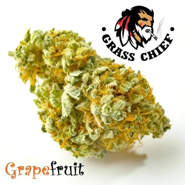 GrapeFruit-Grass-Chief