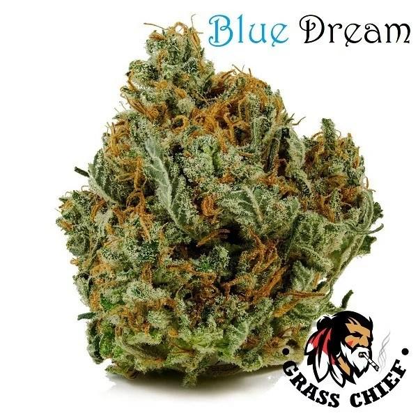 blue dream Grass Chief 2