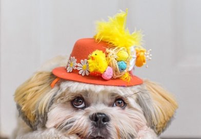 Cliftonville Dog Show – Easter edition