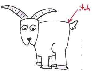 Kent Beck's Itchy Goat metaphor for Lean Startup