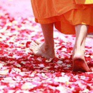 monk walking rose petals