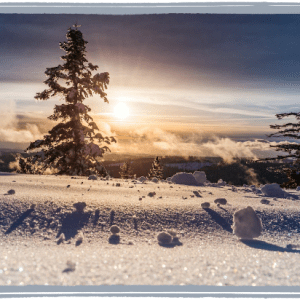 Snowy landscape with pine tree and setting sun