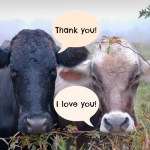 Research Shows That Gratitude Boosts Love