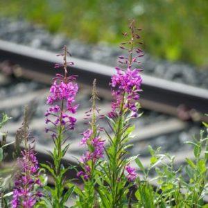 flowers tracks