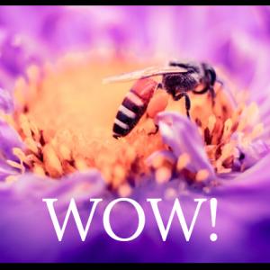 bee drinking from a purple flower