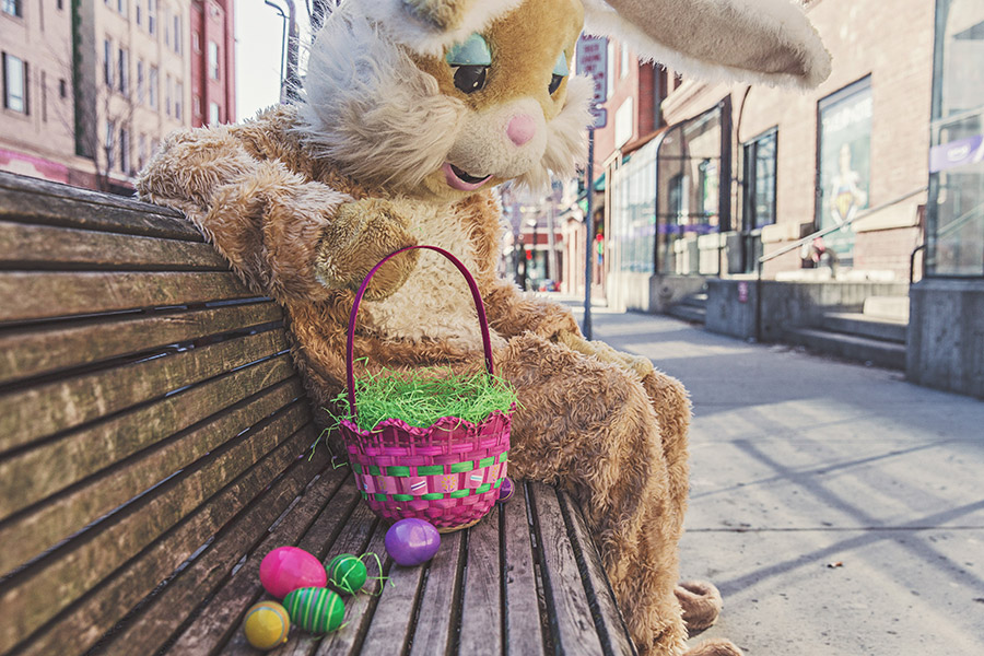 Sad Bunny Free Photo